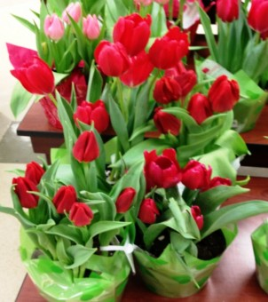 Grocery Store Tulips 1